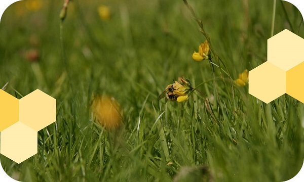 bees-in-flowers
