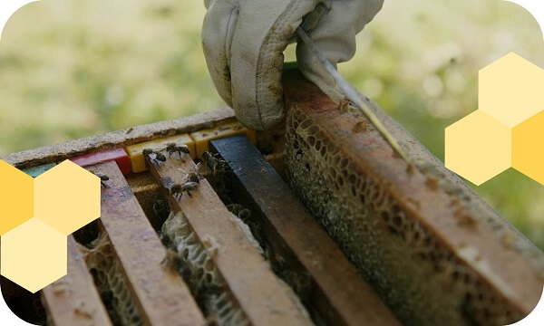 wooden-slates-hive